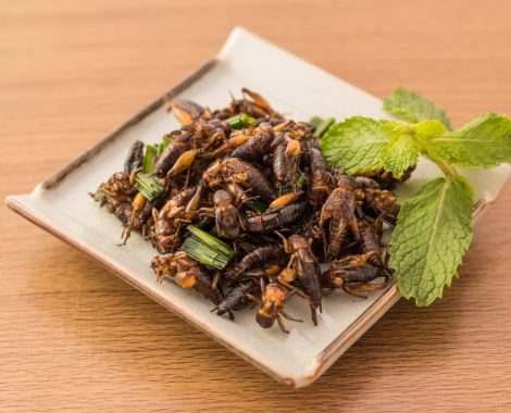 Fried-Crickets-on-a-Plate-Bug-Bazaar